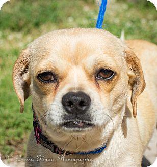 Pekingese Mix Dog for adoption in Daleville, Alabama - Ivy