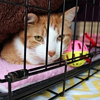 Adopt A Pet :: Creme - Yardley, PA