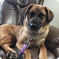 Adopt A Pet :: Maya - Grand Rapids, MI