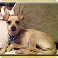 Adopt A Pet :: Tucker - Scottsdale, AZ