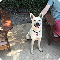 Adopt A Pet :: Holly..I am trained & sweet!! - Redondo Beach, CA