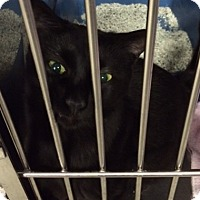 Adopt A Pet :: Tilda - Byron Center, MI