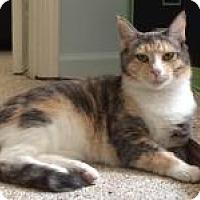 Adopt A Pet :: Amber - Duluth, GA