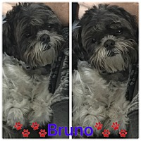 Adopt A Pet :: Bruno - Playa Del Rey, CA