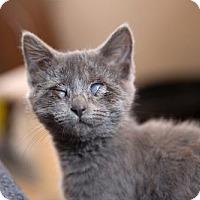 Adopt A Pet :: Shiva & Arbus - St. Paul, MN