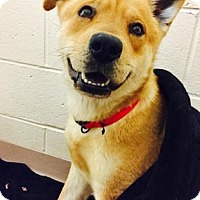 Adopt A Pet :: Coffee - Atlanta, GA