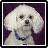 Adopt A Pet :: Jingles - San Diego, CA