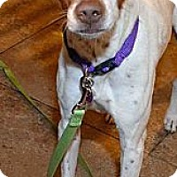 Adopt A Pet :: Bentley - Phoenix, AZ