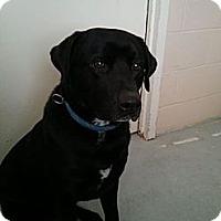 Adopt A Pet :: Vinnie - Wallaceburg, ON