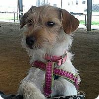 Adopt A Pet :: Reba - Houston, TX