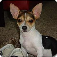Adopt A Pet :: P.J. - Arlington, TX