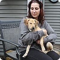 Adopt A Pet :: Sicily - Freeport, NY