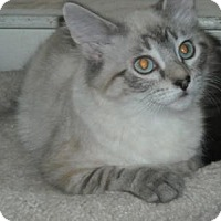 Adopt A Pet :: Skye-Dog Friendly Lovebug! - Arlington, VA