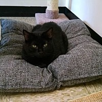 Adopt A Pet :: Ebony Reese - Pineville, NC
