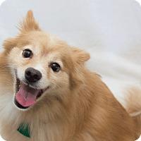 Adopt A Pet :: Bubalou - Cumberland, MD
