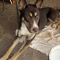Adopt A Pet :: Roxy - Santa Fe, NM