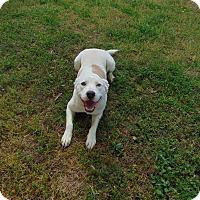 Adopt A Pet :: Jewel - Lufkin, TX