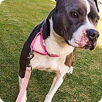 Adopt A Pet :: Phoebe - Huntington Beach, CA