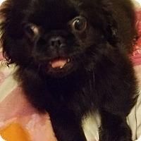 Adopt A Pet :: Da Vinci - Detroit, MI