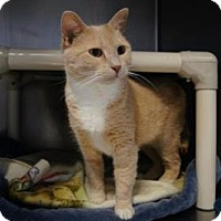 Adopt A Pet :: Marnie - New Milford, CT