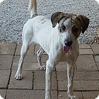 Adopt A Pet :: Zack - Huntsville, AL