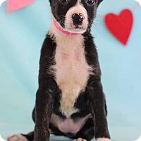 Adopt A Pet :: Gail - Waldorf, MD