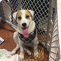 Adopt A Pet :: Hulk - Doylestown, PA