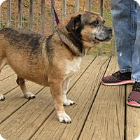 Adopt A Pet :: annie-$100 - Spring Valley, NY