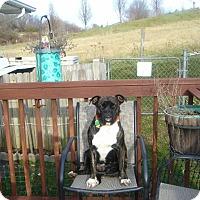 Adopt A Pet :: Mitzi - Sherman, CT