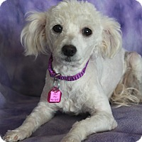 Adopt A Pet :: Candy - Wichita, KS
