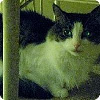 Adopt A Pet :: CP - NJ - Noble Noah - Blairstown, NJ