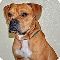 Adopt A Pet :: Gusto - Port Washington, NY