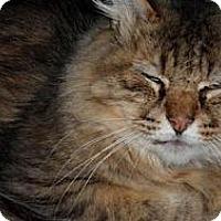 Adopt A Pet :: Novice - Seattle, WA