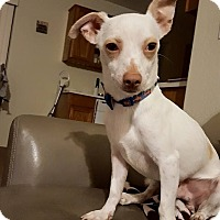 Adopt A Pet :: Opie - Scottsdale, AZ