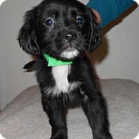 Adopt A Pet :: Wilkes Puppy #1 Adopted! - Kannapolis, NC