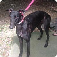 Adopt A Pet :: CET Black Jack - Gerrardstown, WV