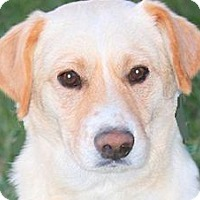 Adopt A Pet :: OSCAR(KIND--GENTLE-LOVING! - Wakefield, RI