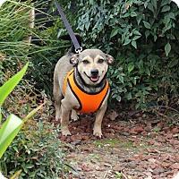 Adopt A Pet :: Oscar - Yuba City, CA