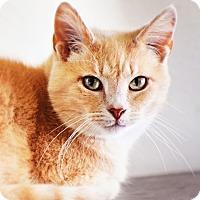 Adopt A Pet :: Erica - Xenia, OH