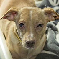 Adopt A Pet :: Ryder - Colorado Springs, CO