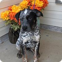 Adopt A Pet :: Holden Preppy Solis - Wakefield, RI