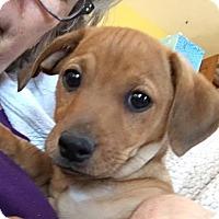 Adopt A Pet :: Adoption pending - Georgie - Orangeburg, SC
