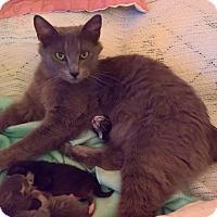 Adopt A Pet :: CINDER - Raleigh, NC