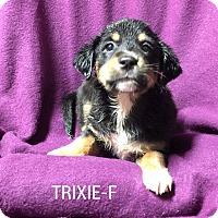 Adopt A Pet :: Trixie (ADOPTION PENDING) - Burlington, VT