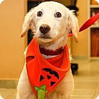 Adopt A Pet :: Marvelous Meryl - Brooklyn, NY