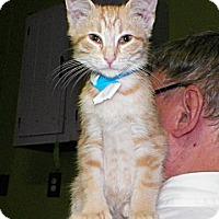 Adopt A Pet :: Skye - Dover, OH