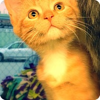 Adopt A Pet :: Hallie - Green Bay, WI