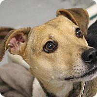 Adopt A Pet :: Snoopy - Grafton, MA