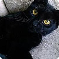 Adopt A Pet :: Clara - Concord, NC