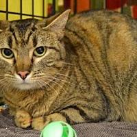 Adopt A Pet :: Missy - Logan, UT